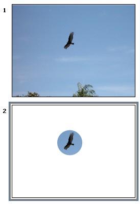 maschera immagine in powerpoint